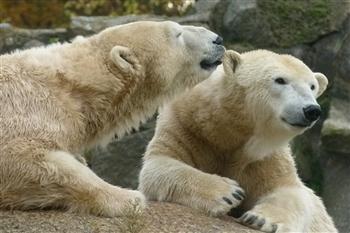 Yorkshire Wildlife Park Day Trip 2020